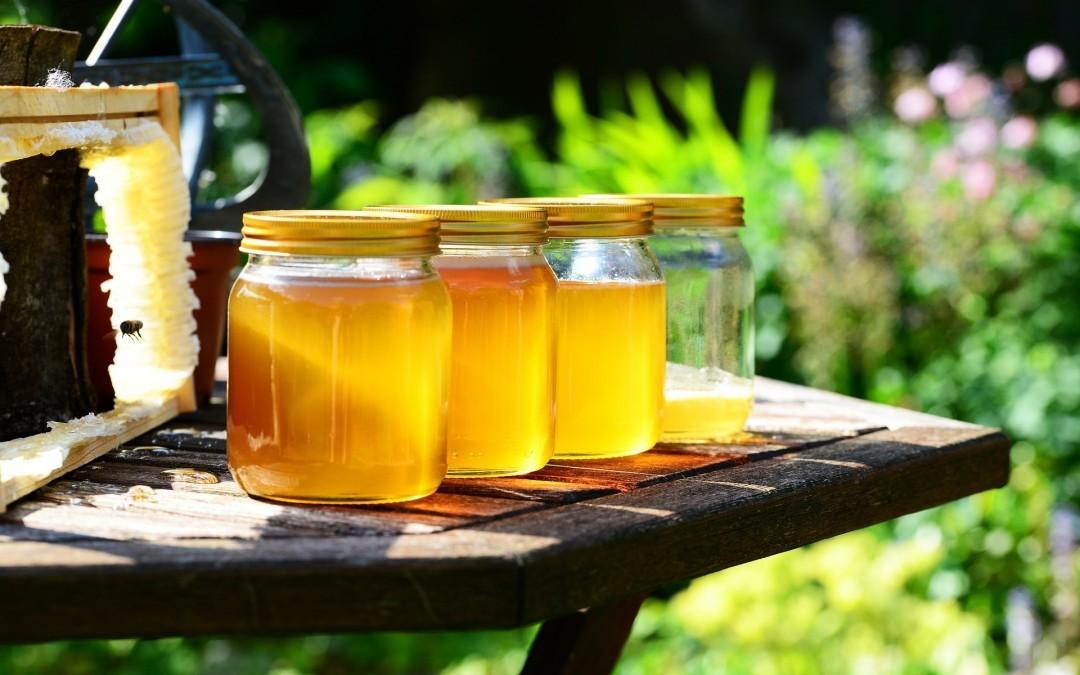 นมผึ้งคืออะไร ทำมาจากอะไร ทุกเรื่องเกี่ยวกับนมผึ้ง อ่านโพสเดียวจบ